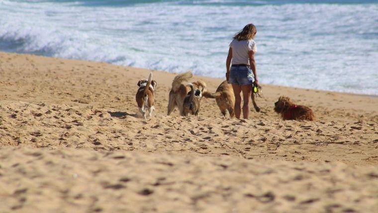 海辺を散歩する女性と犬たち