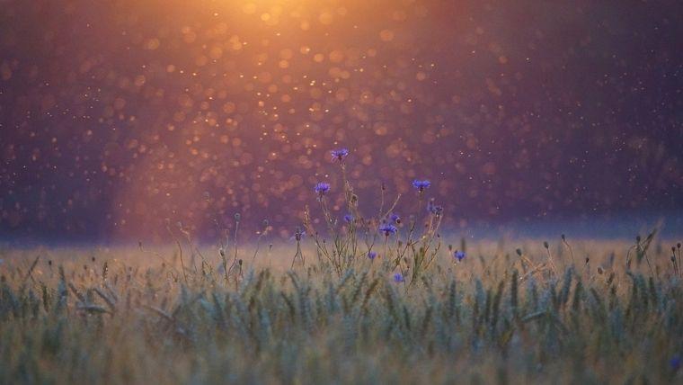 花と太陽の光