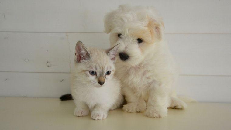 白い子犬と子猫